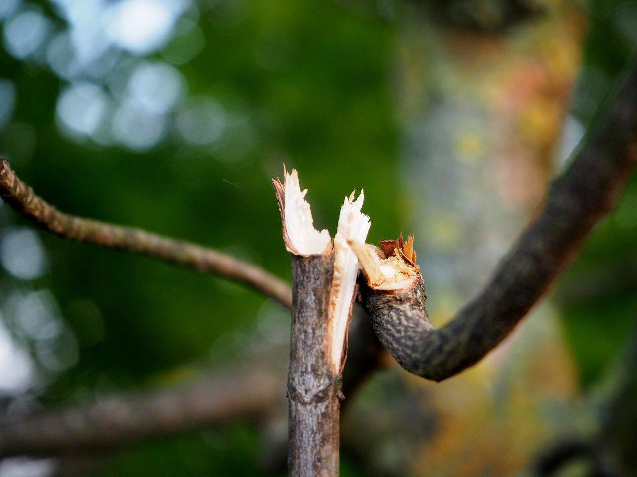 Go tree Quotes