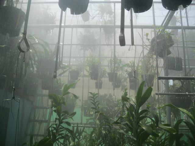 Bạn hãy chọn đúng béc phun sương để cây lan có thể sinh trưởng tốt hơn