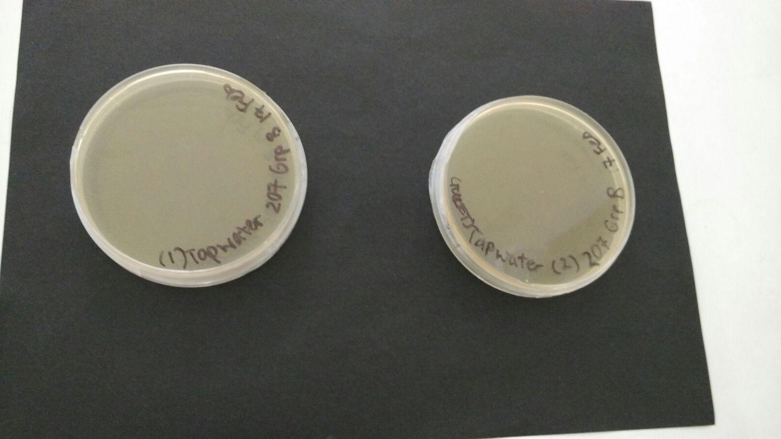 TW_bacteria_lab&toilet.jpg