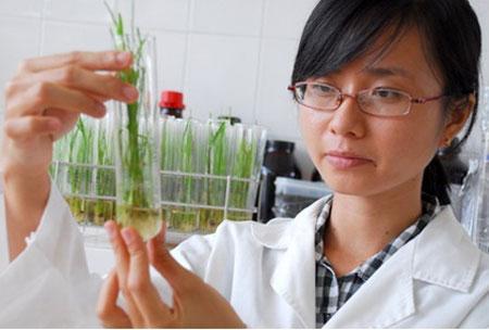 Công việc chính của Kỹ sư trồng trọt