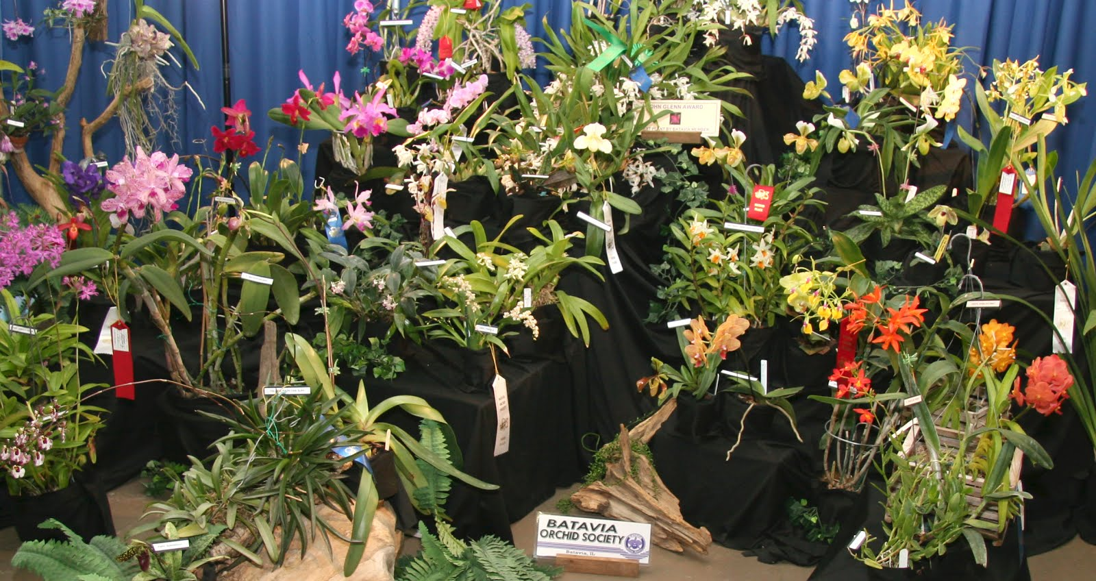2015 Batavia Orchid Society Exhibit (www.bataviaorchidsociety.org)