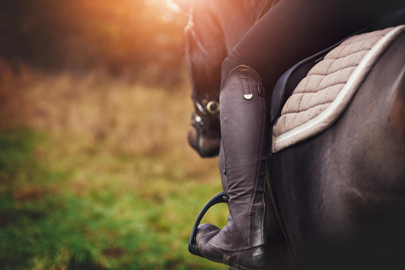 Giddy Up: The Ultimate Guide to Horseback Riding