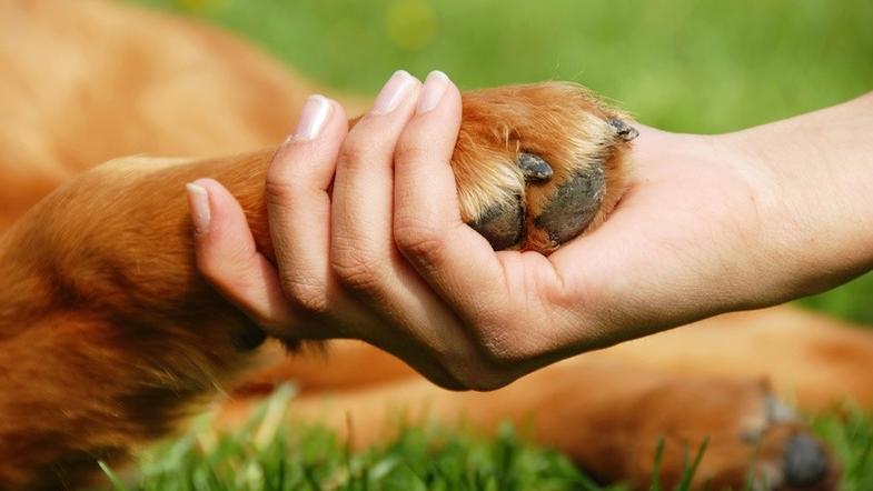 У нас з тваринами повинні бути взаємовигідні відносини.