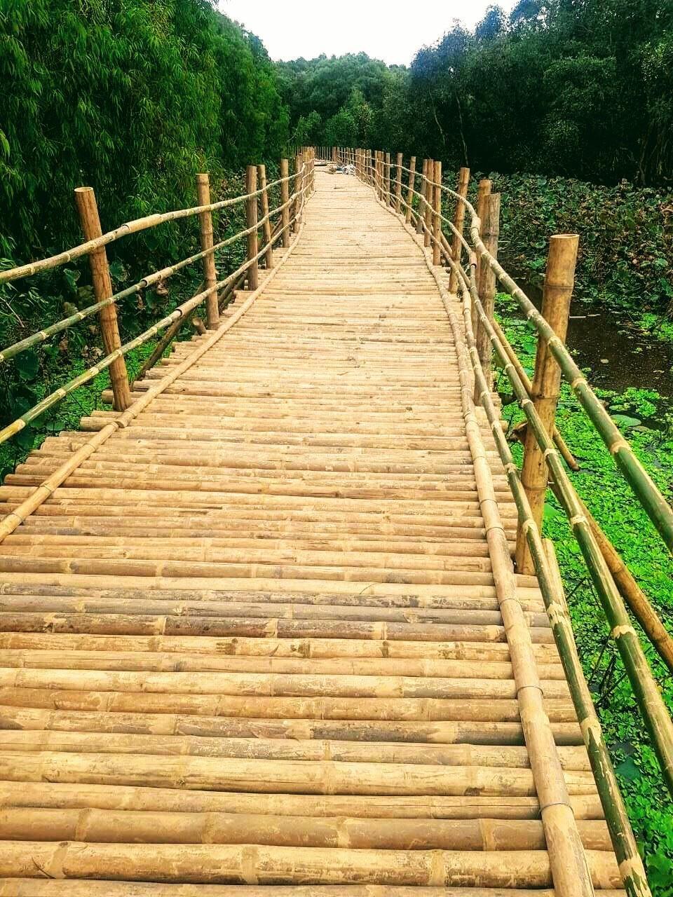 3. Giao thông tre Việt Nam xuyên rừng đang được gấp rút hoàn thành