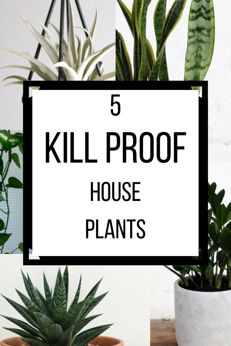 Kill Proof House Plants