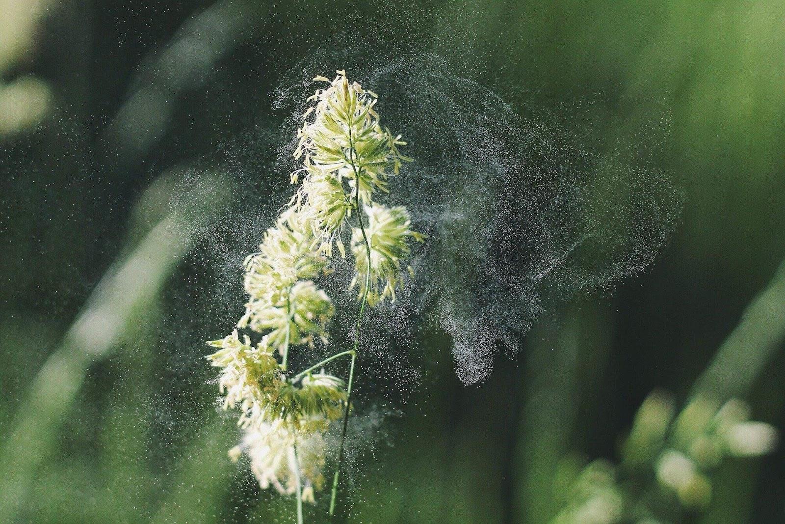 A plant spreading pollen
