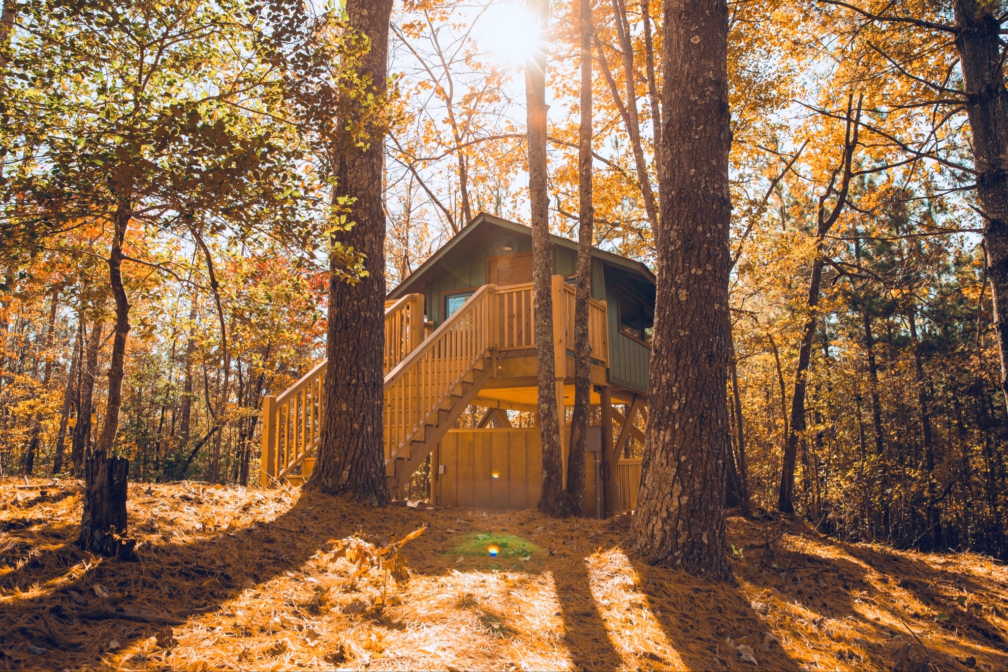 Treetop cabin during fall at Golden Valley