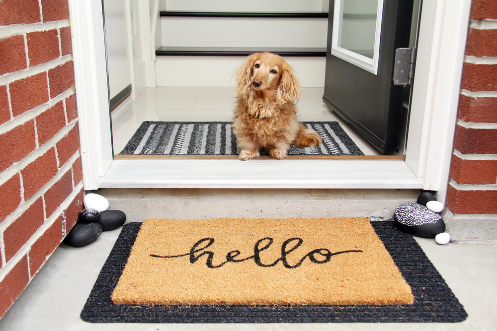Longhair,Dachshund,Sitting,In,The,Front,Entrance,Of,A,Home.