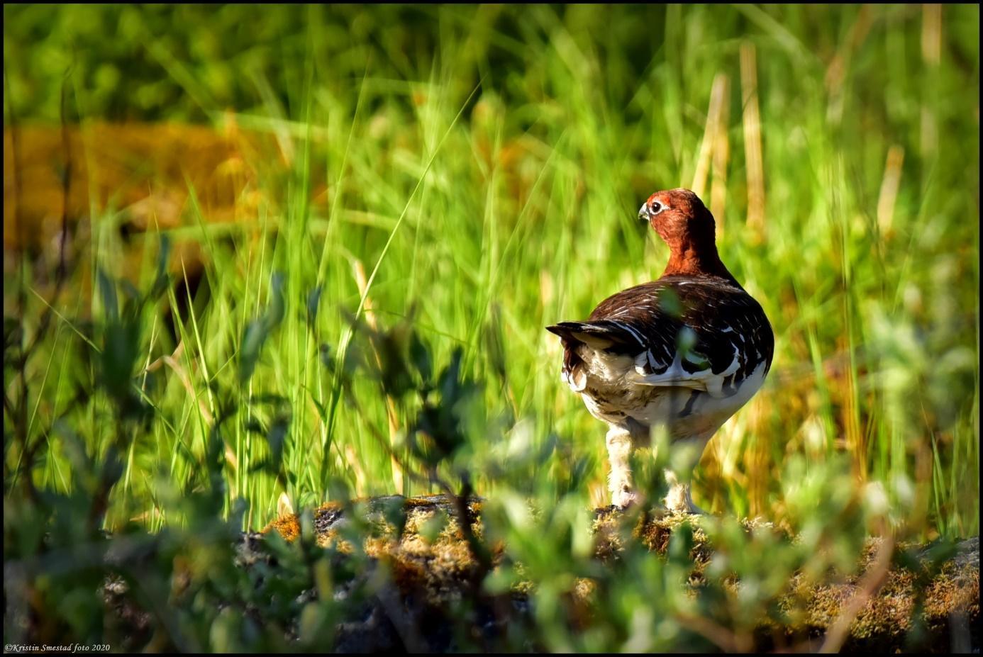 Et bilde som inneholder gress, utendørs, fugl, dyr  Automatisk generert beskrivelse