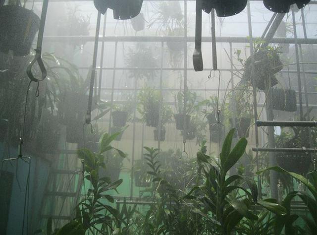 Bạn cần chú ý các vấn đề khi sử dụng máy phun sương tưới lan