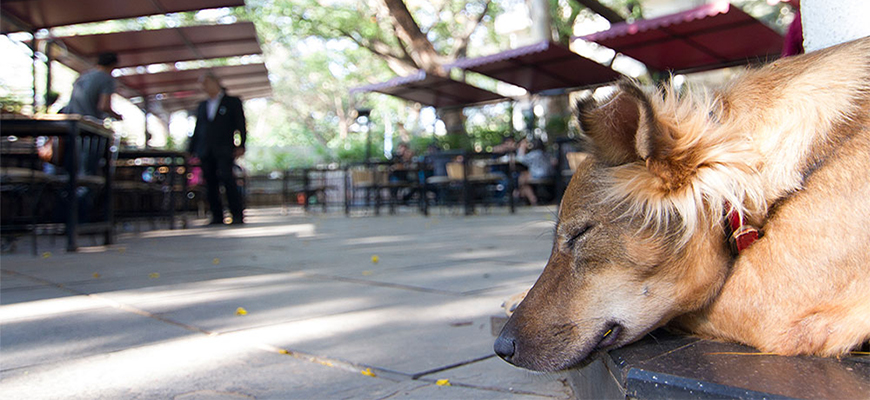 Dog-Friendly Cafes in Pune