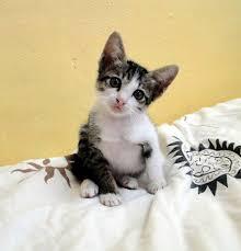 ผลการค้นหารูปภาพสำหรับ แมวกำพร้า