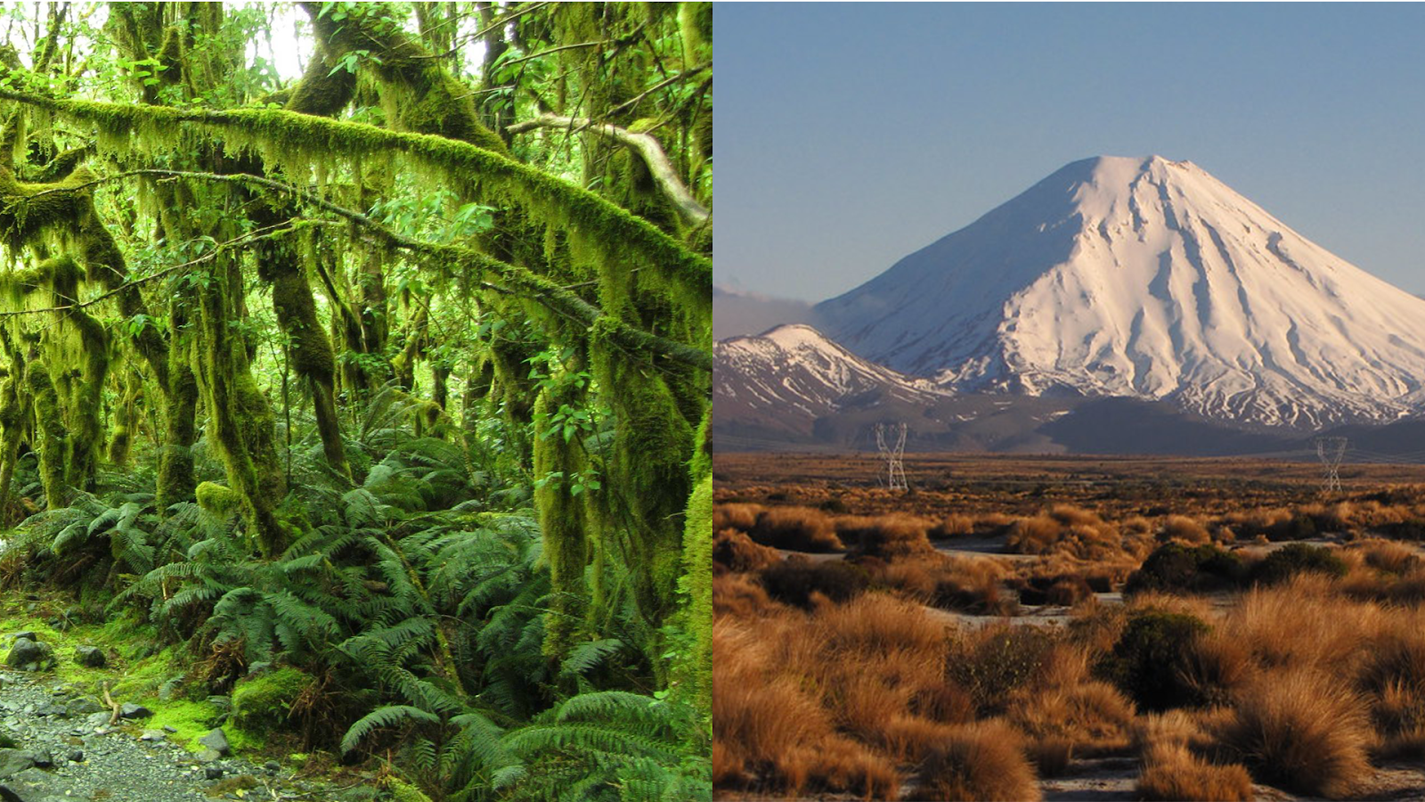 New Zealand mountains and rainforest