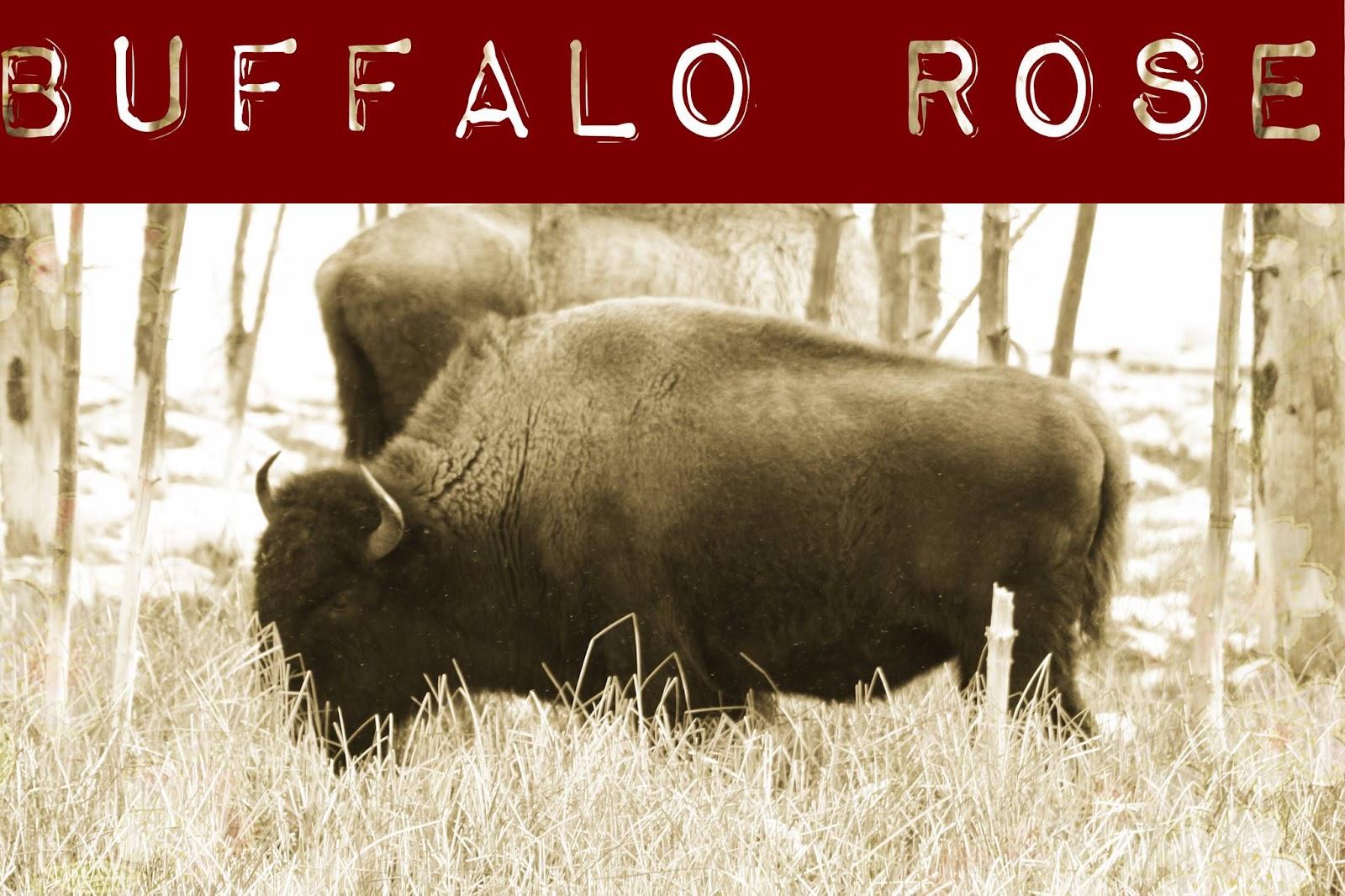 buffalo rose 2.jpg