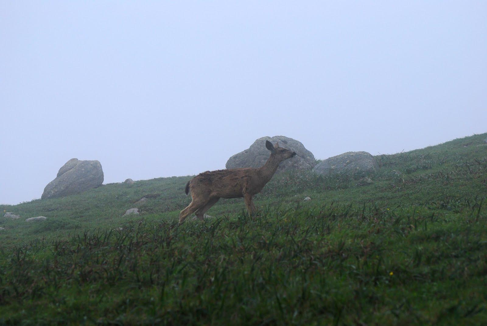 deer solo.jpg