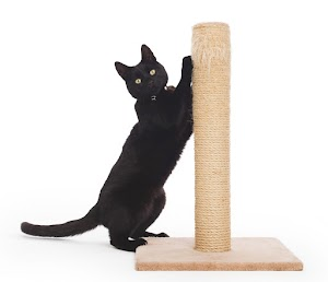 What to do if your cat isn't using scratch post