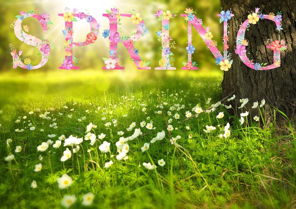Spring, Flowers, Sun, Sunny, ...