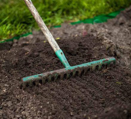 Подготовка почвы для посадки нарциссов