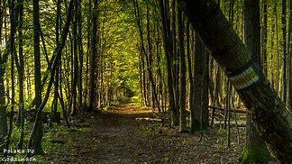 Obraz znaleziony dla: parki narodowe w polsce