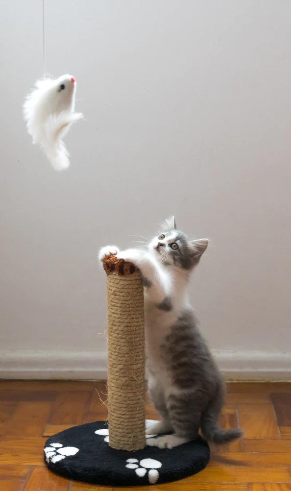 a cat playing with a toy and cat scratcher