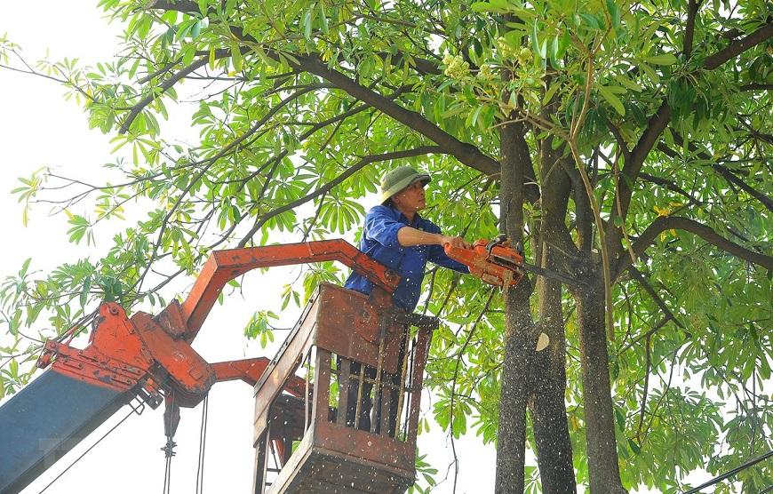 Tỉa bớt cành cây quanh nhà khi có bão