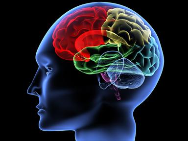 cerebro.png