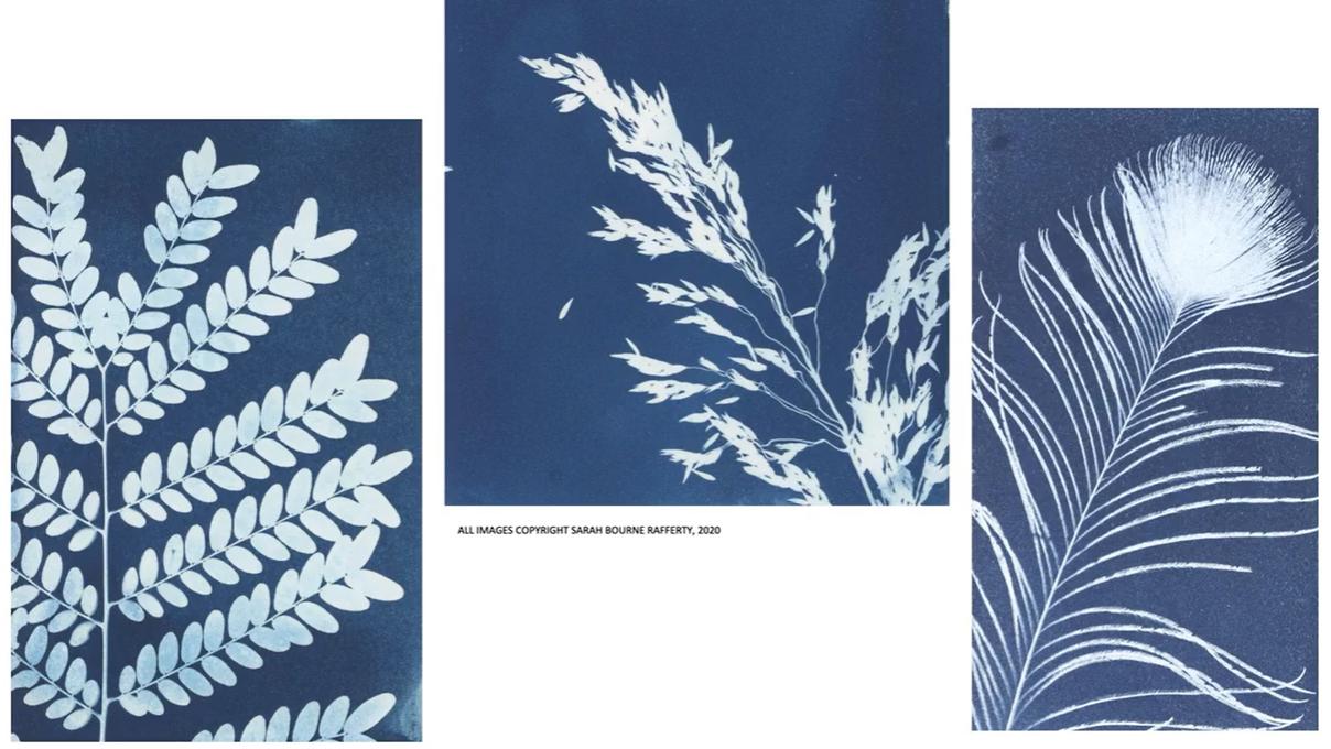 botanical cyanotypes