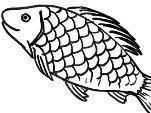 תוצאת תמונה עבור kosher fish fins and scales