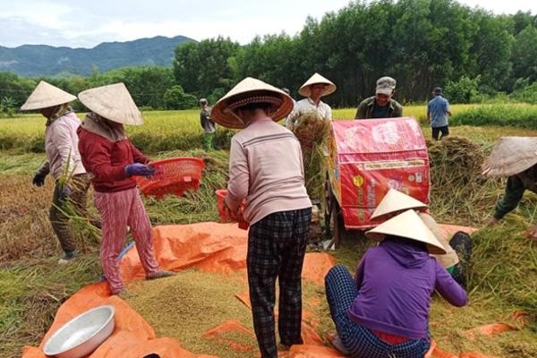 Quảng Nam: Cả nhà đi cách ly, hàng xóm bảo nhau làm ruộng giúp