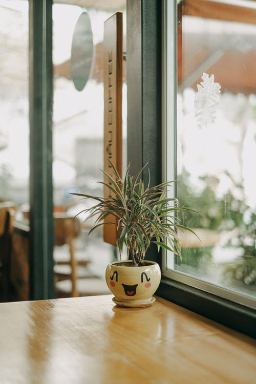 Plant in a Pot on a Table Near Window