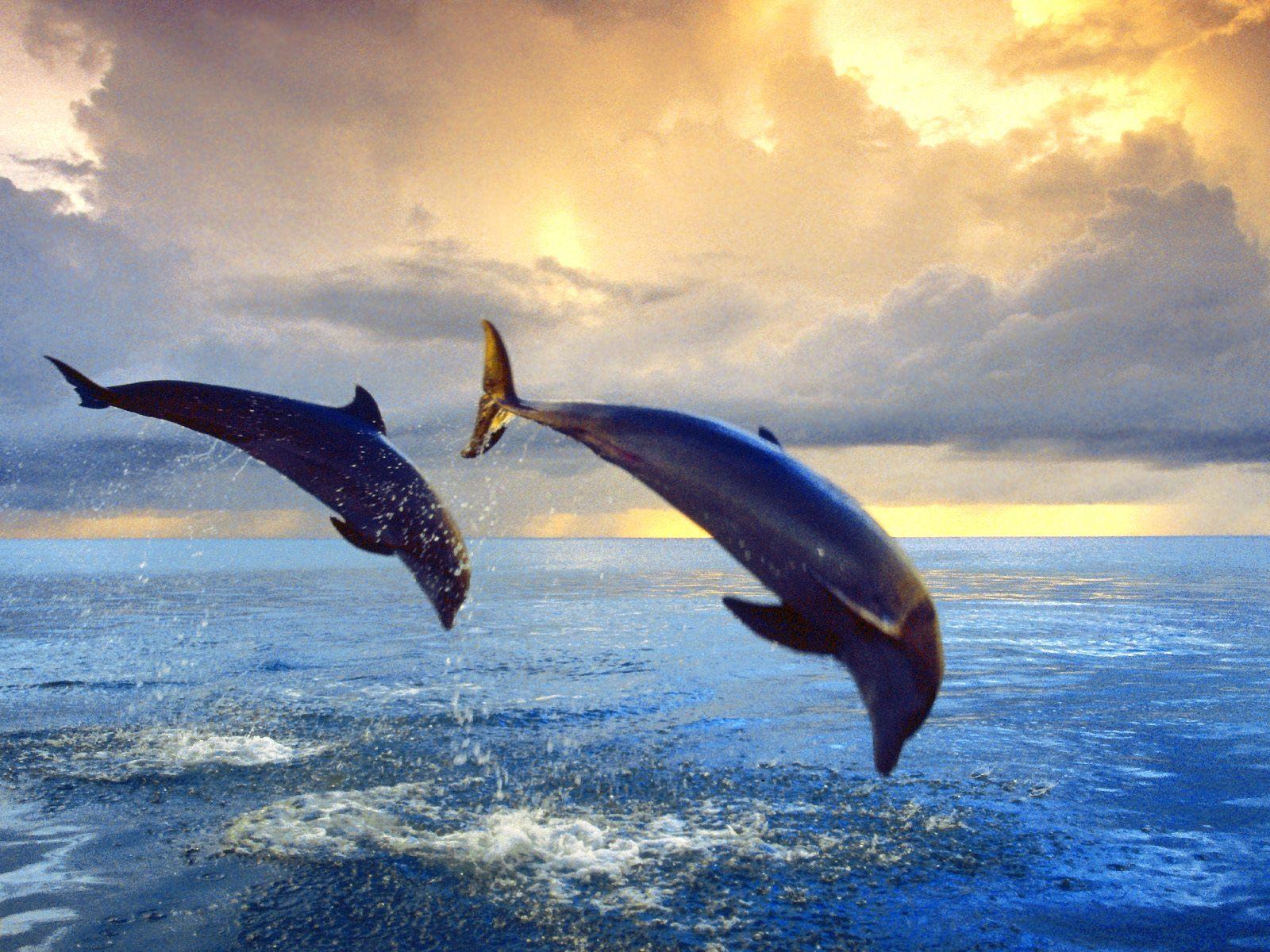 Bottlenose_Dolphins.jpg