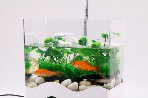 lưu ý khi đặt bể cá phong thủy trong nhà và phòng khách