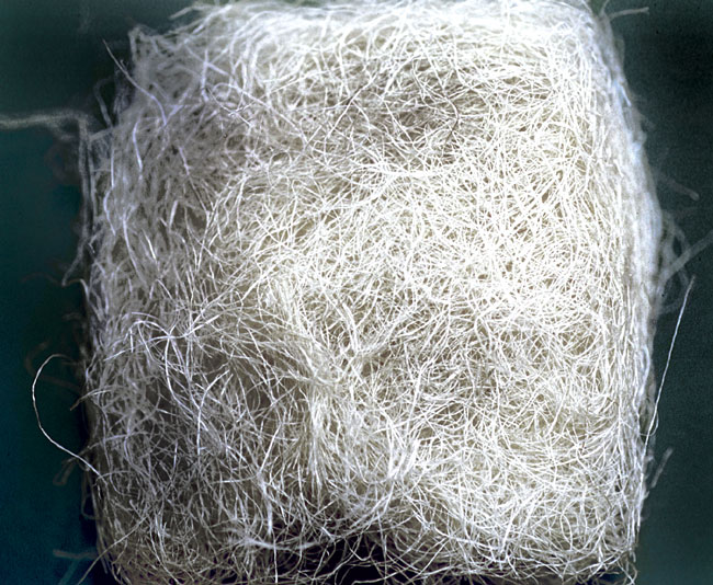 Small white fibers of cactus are another source used for nesting material