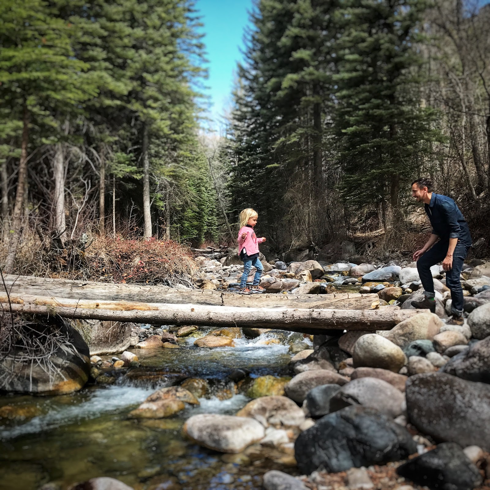 A father and daughter climb over a log in the woods somewhere in the Kootenays