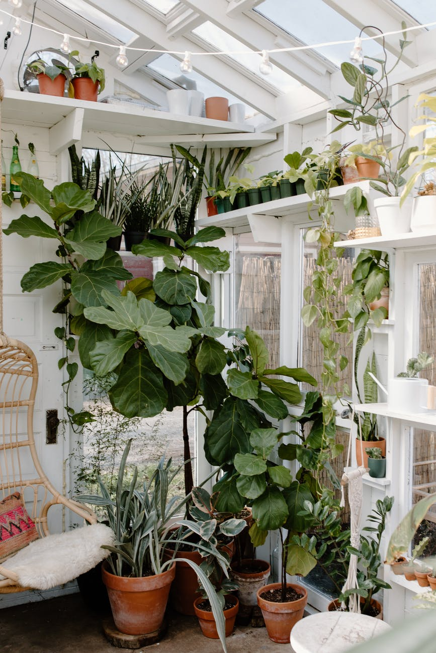 room filled with plants and a hanging wooden swing