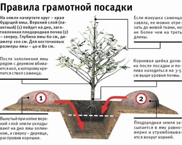 Правила грамотной посадки