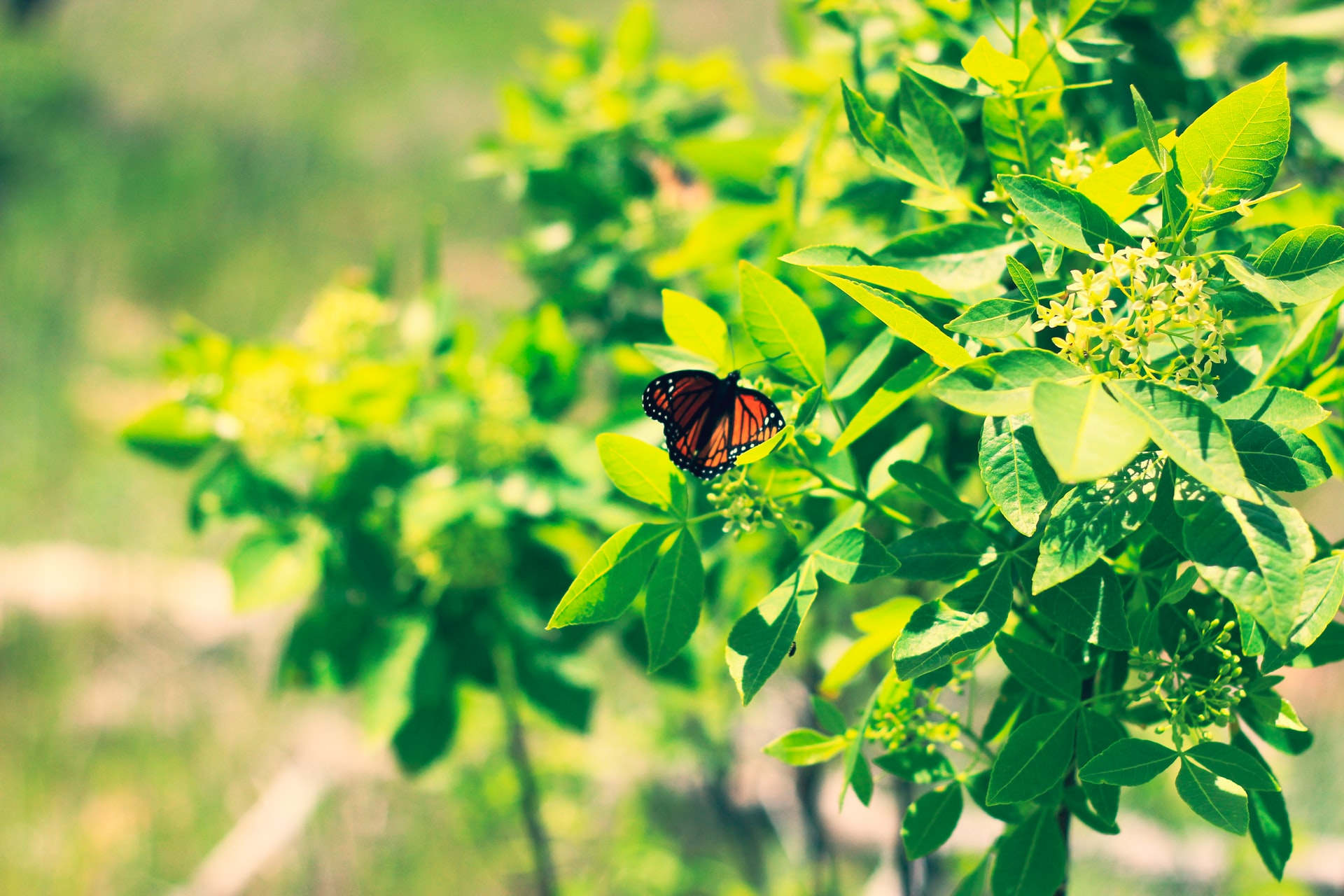 picture of a butterfly on a plant