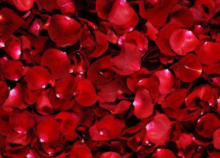 درمان خشکی لب با گلبرگ گل سرخ