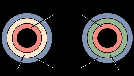 embryo division