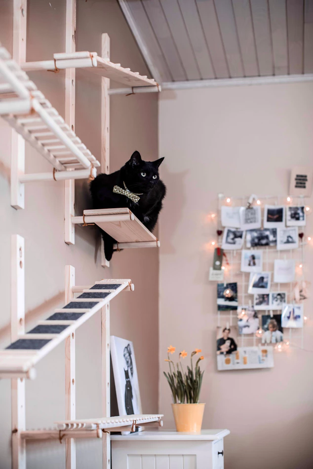 Black cat laying on custom catification shelves on the wall