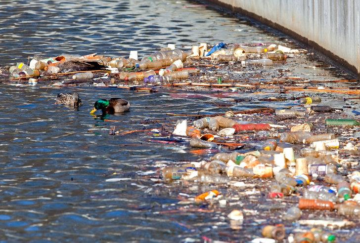 naini lake sewage pollution Submerged macrophytic vegetation in relation to vegetation in relation to eutrophication level of lake pollution because of this, naini tal.