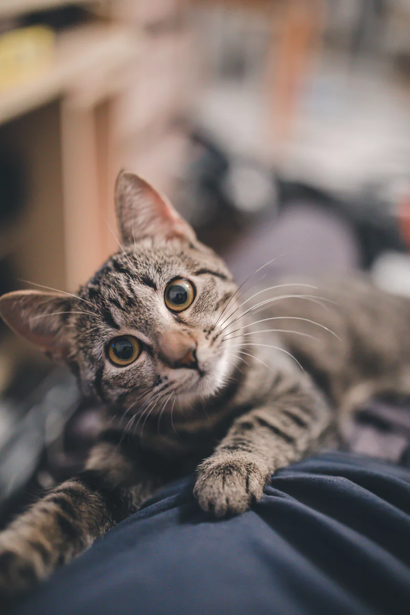 Cat anxiety (A complete guide)
