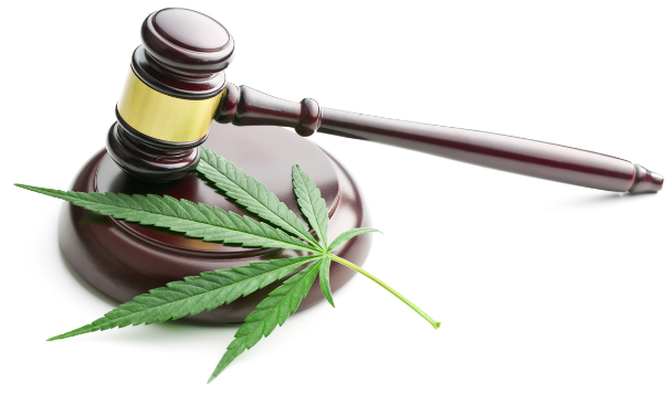california courts and citizens free themselves of thousands of marijuana cases