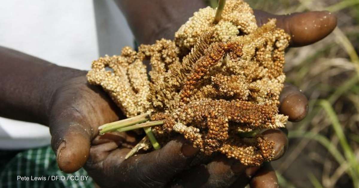 Can millets ensure future food security in a warming world?