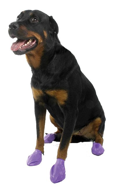 Pawz Purple Water-Proof Dog Boot (L) (2000/-) Best Dog Boots In India