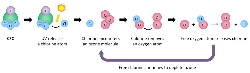 Chlorofluorocarbons | BioNinja