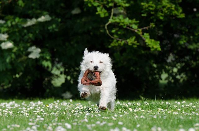 small-dog-750607_640.jpg