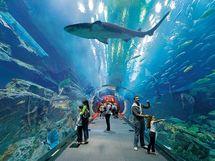 akvarium 13.jpg