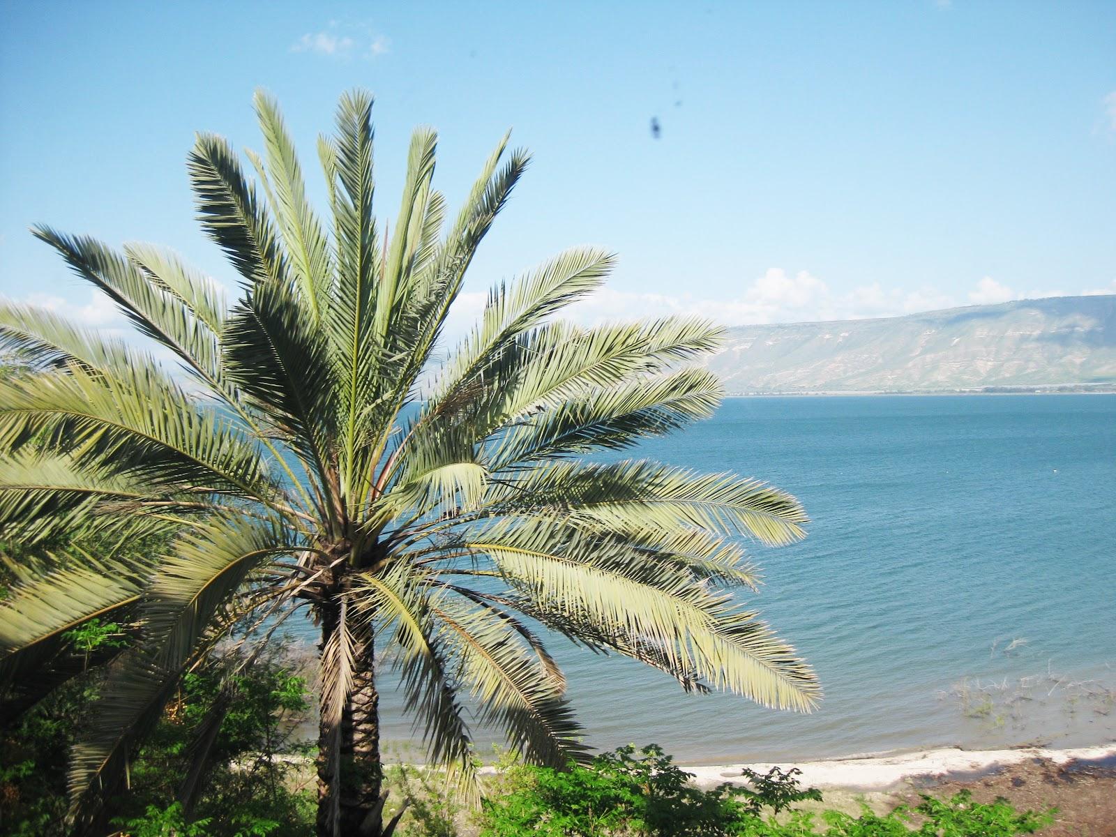 Пальма у озера Кинерет