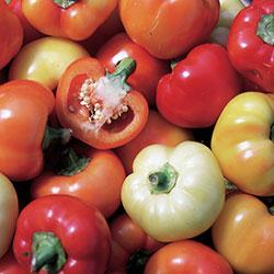 http://www.seedsavers.org/alma-paprika-organic-pepper